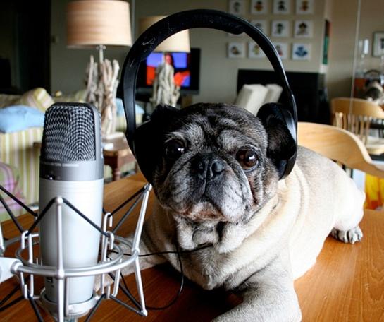 WNYC Podcast